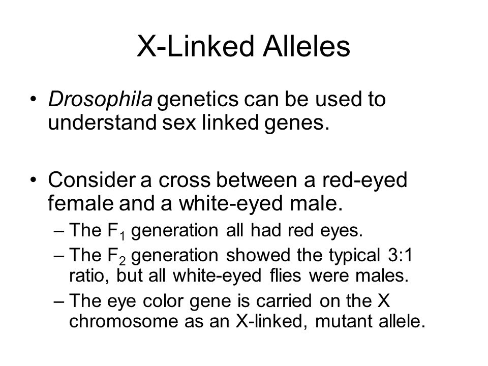 X-Linked Alleles Drosophila genetics can be used to understand sex linked genes. Consider a cross between a red-eyed female and a white-eyed male.