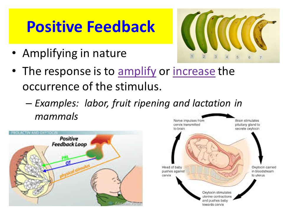 positive feedback for essays Positive feedback and classroom environment student work is typically met by teacher feedback on a number of important items, including his or her achievement, progress, and skills how that feedback is structured and delivered is a matter for debate among educators.