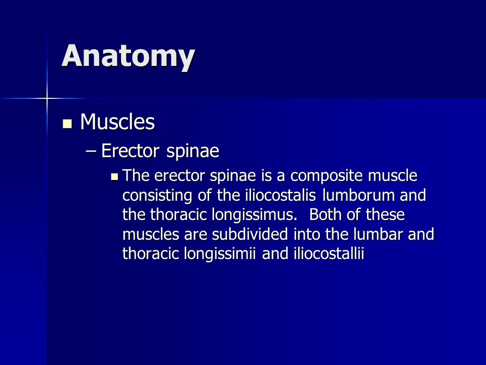 Anatomy Muscles Erector spinae