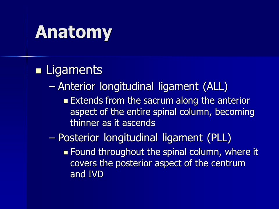 Anatomy Ligaments Anterior longitudinal ligament (ALL)