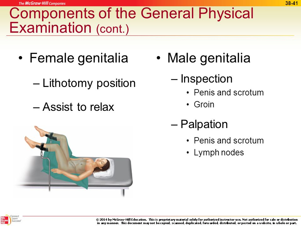 Physical examination male including penis exam