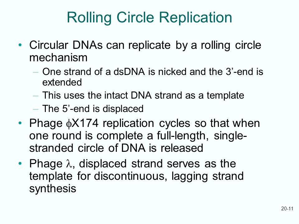 Rolling Circle Replication