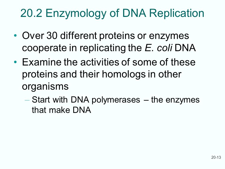 20.2 Enzymology of DNA Replication