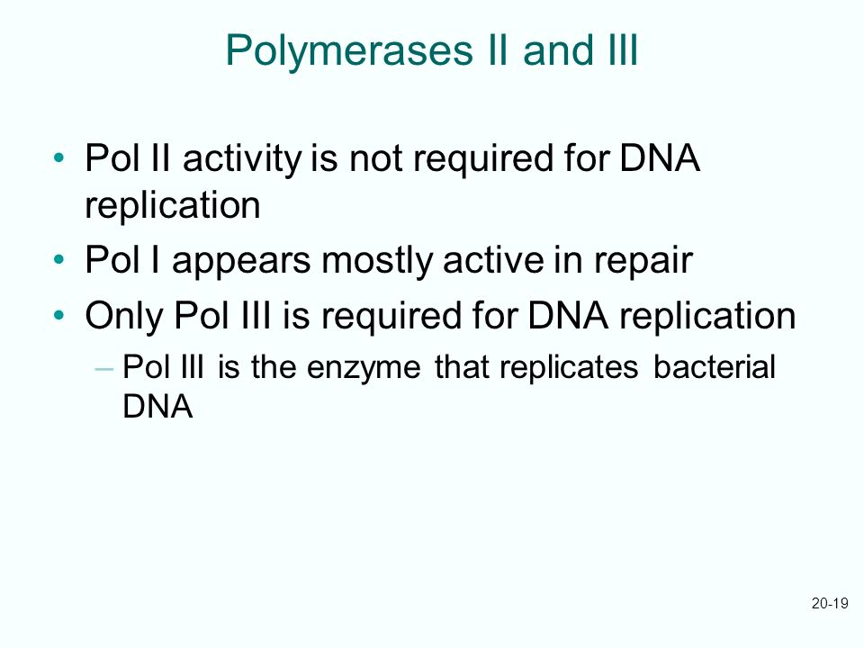 Polymerases II and III Pol II activity is not required for DNA replication. Pol I appears mostly active in repair.