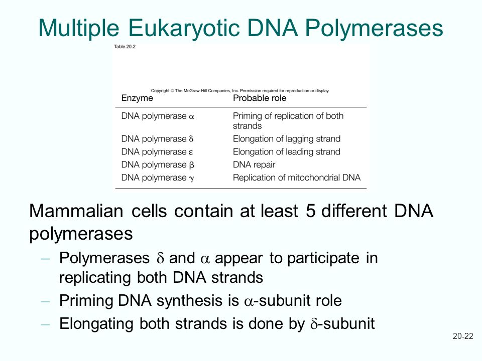 Multiple Eukaryotic DNA Polymerases