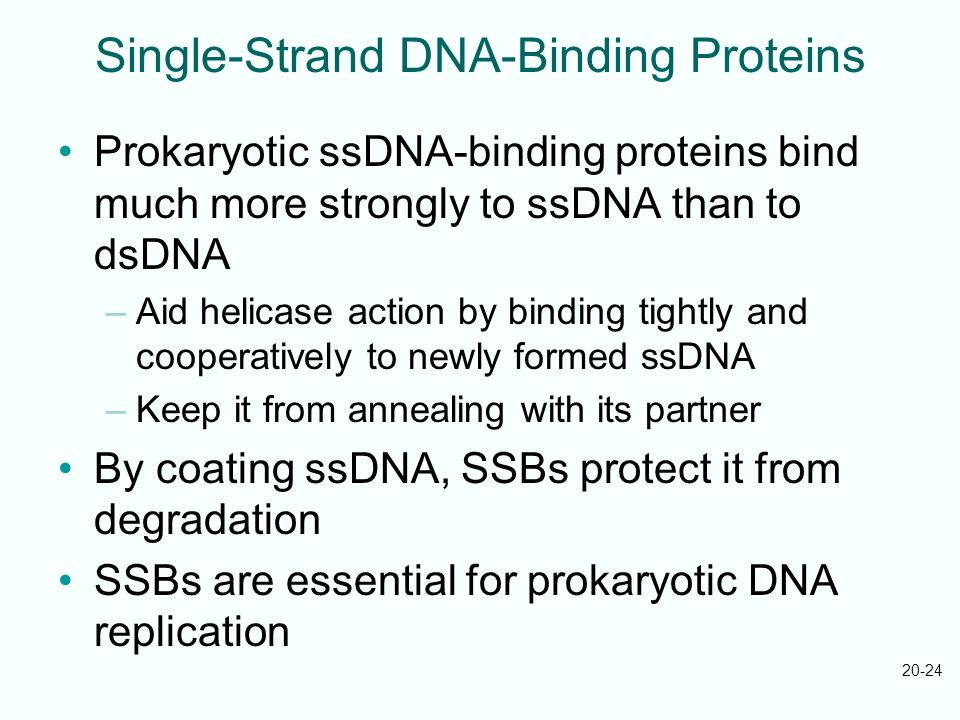Single-Strand DNA-Binding Proteins