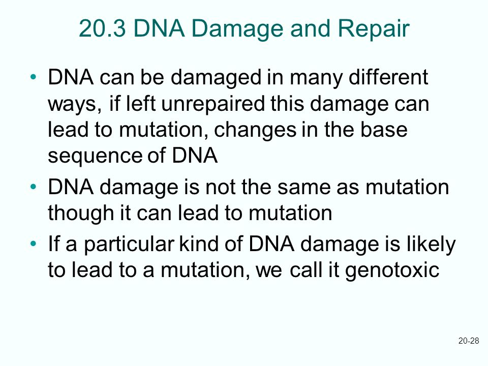 20.3 DNA Damage and Repair