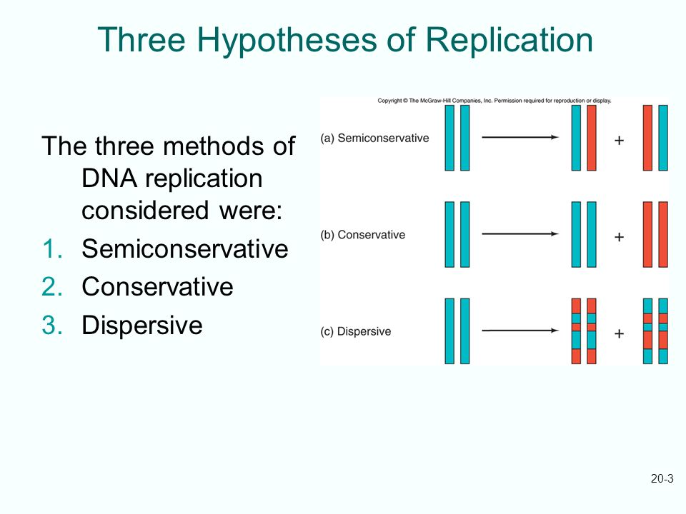 Three Hypotheses of Replication