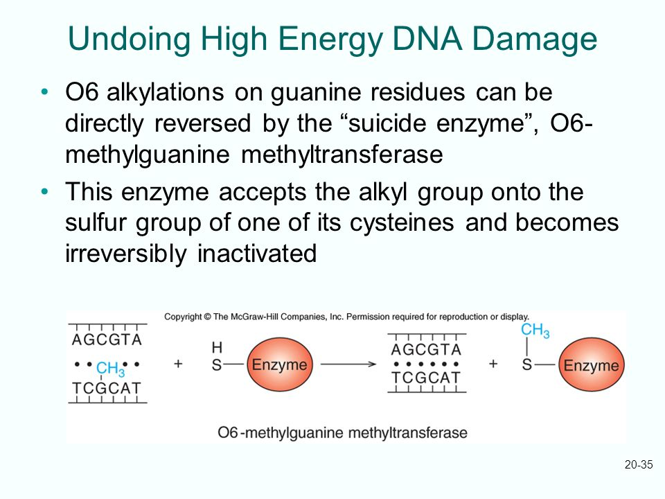 Undoing High Energy DNA Damage