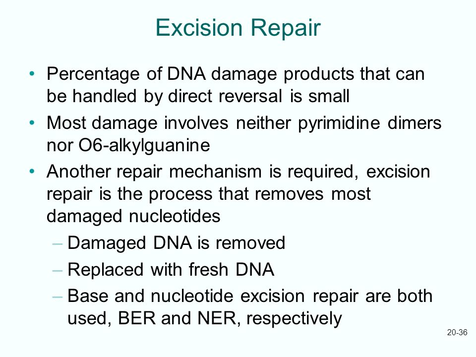 Excision Repair Percentage of DNA damage products that can be handled by direct reversal is small.