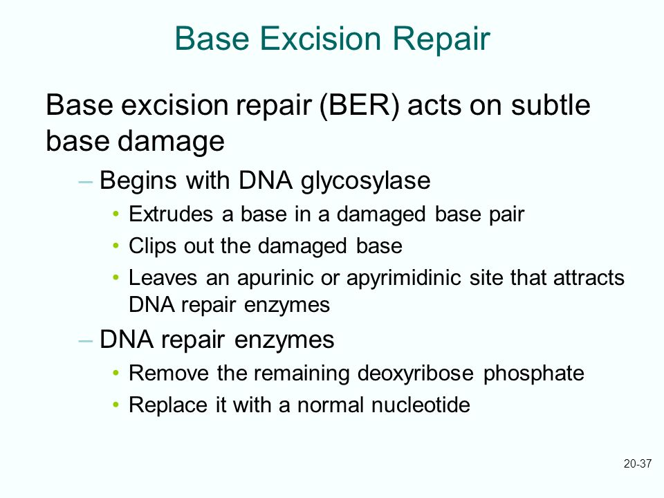 Base Excision Repair Base excision repair (BER) acts on subtle base damage. Begins with DNA glycosylase.
