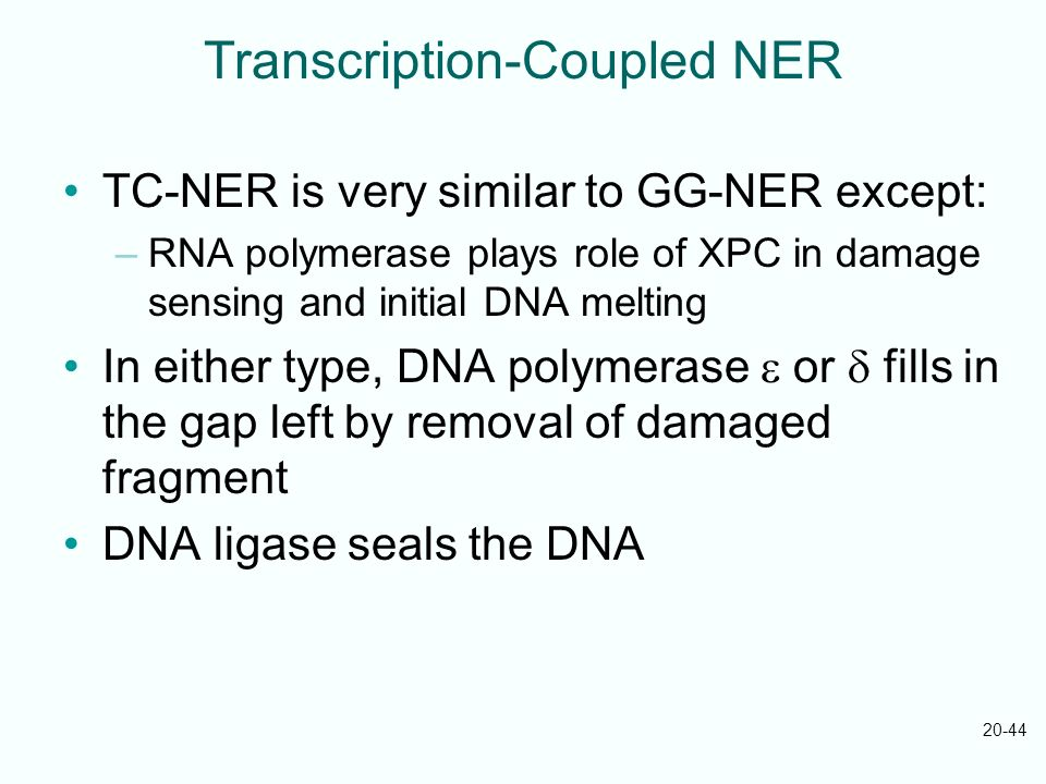 Transcription-Coupled NER