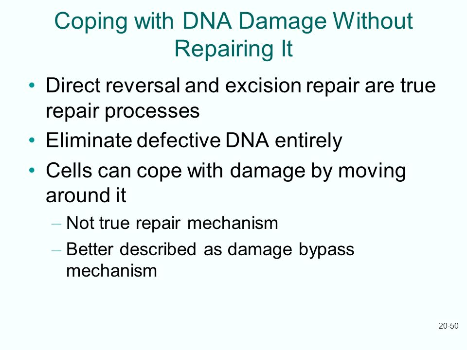 Coping with DNA Damage Without Repairing It