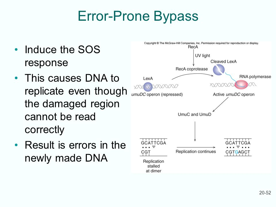 Error-Prone Bypass Induce the SOS response