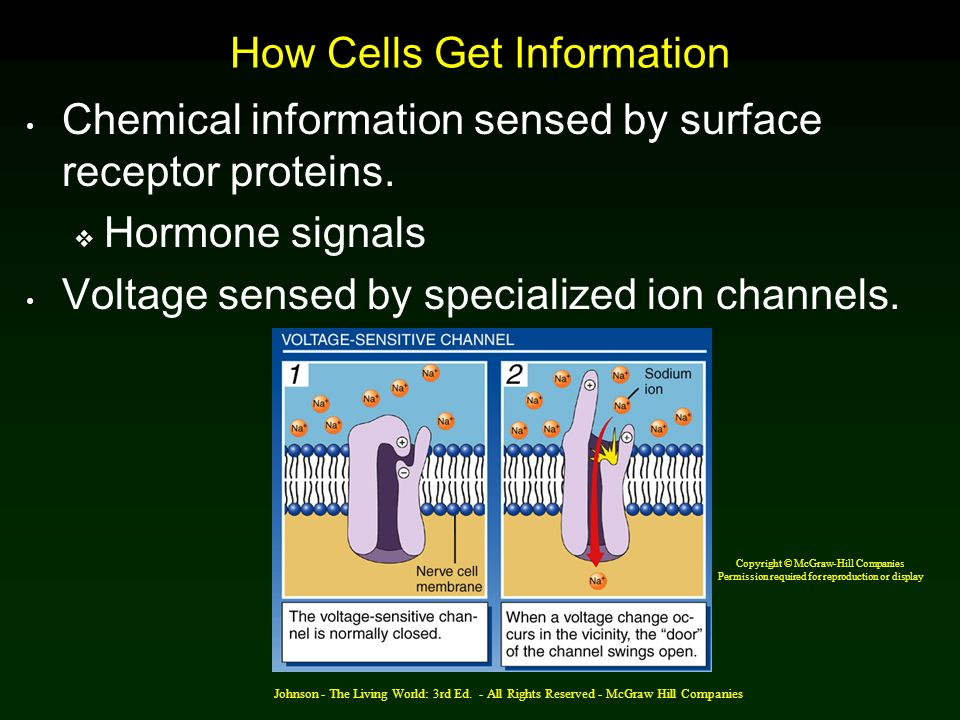 How Cells Get Information