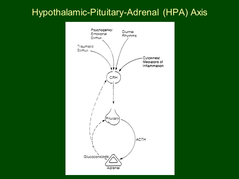 Hypothalamic-Pituitary-Adrenal (HPA) Axis