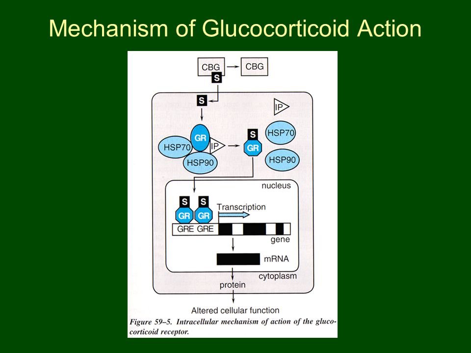 Mechanism of Glucocorticoid Action