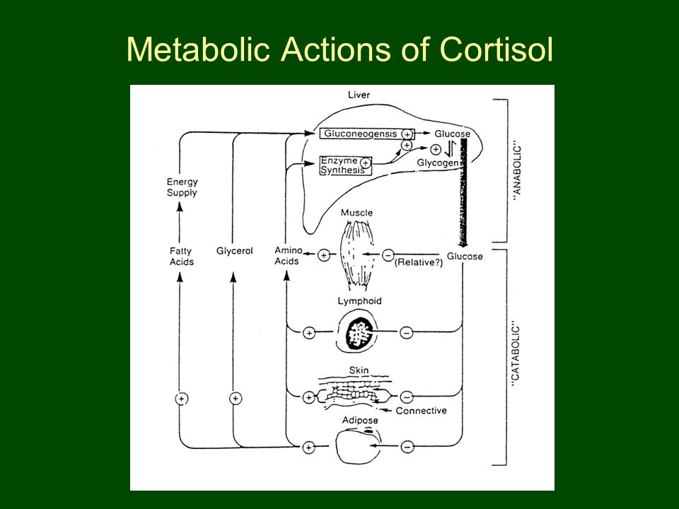 Metabolic Actions of Cortisol