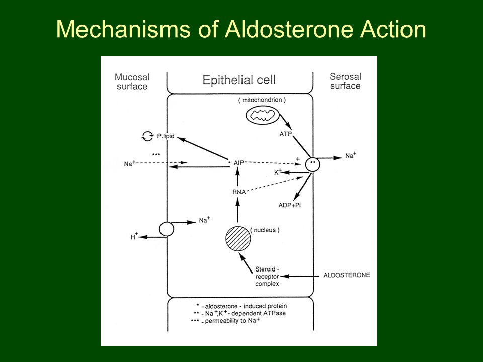 Mechanisms of Aldosterone Action