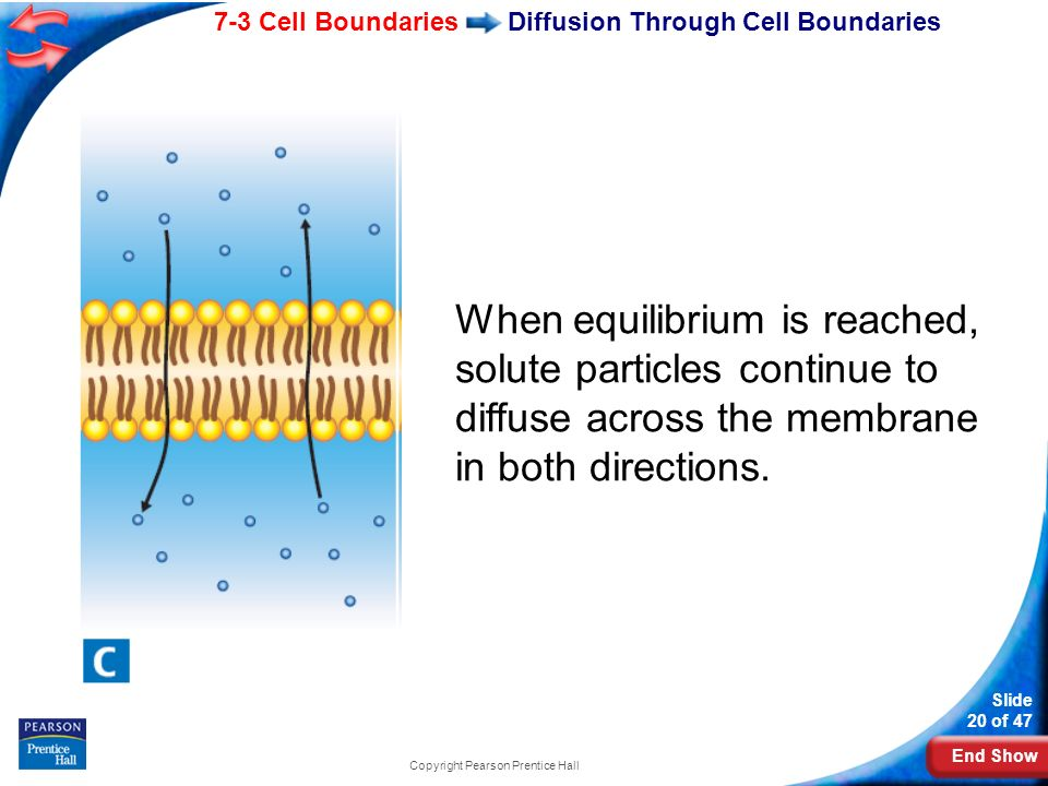 Diffusion Through Cell Boundaries