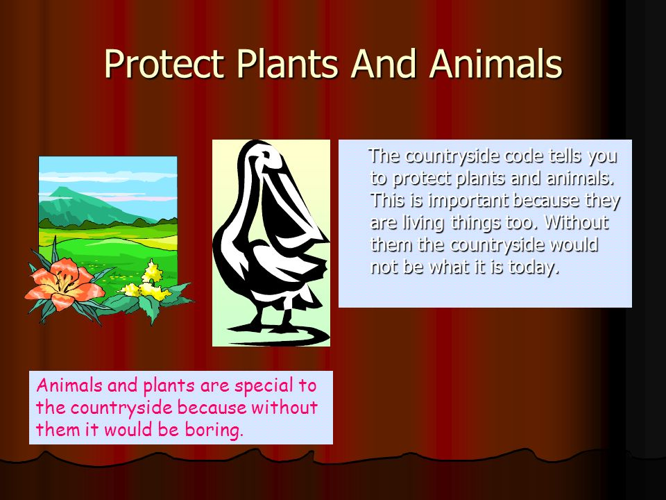 Protect Plants And Animals