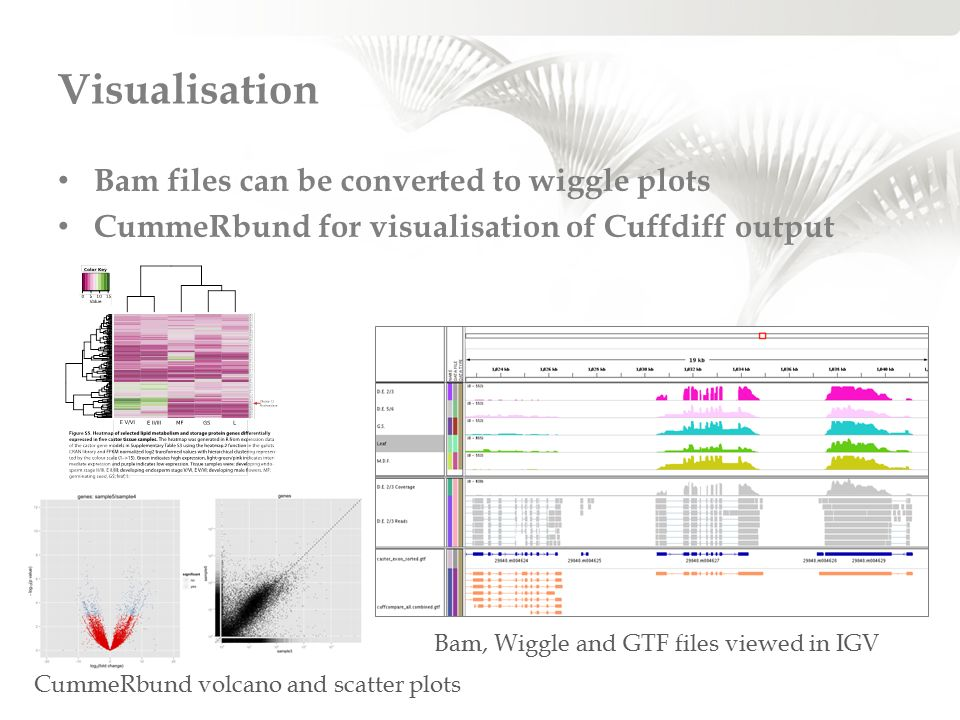 Visualisation Bam files can be converted to wiggle plots