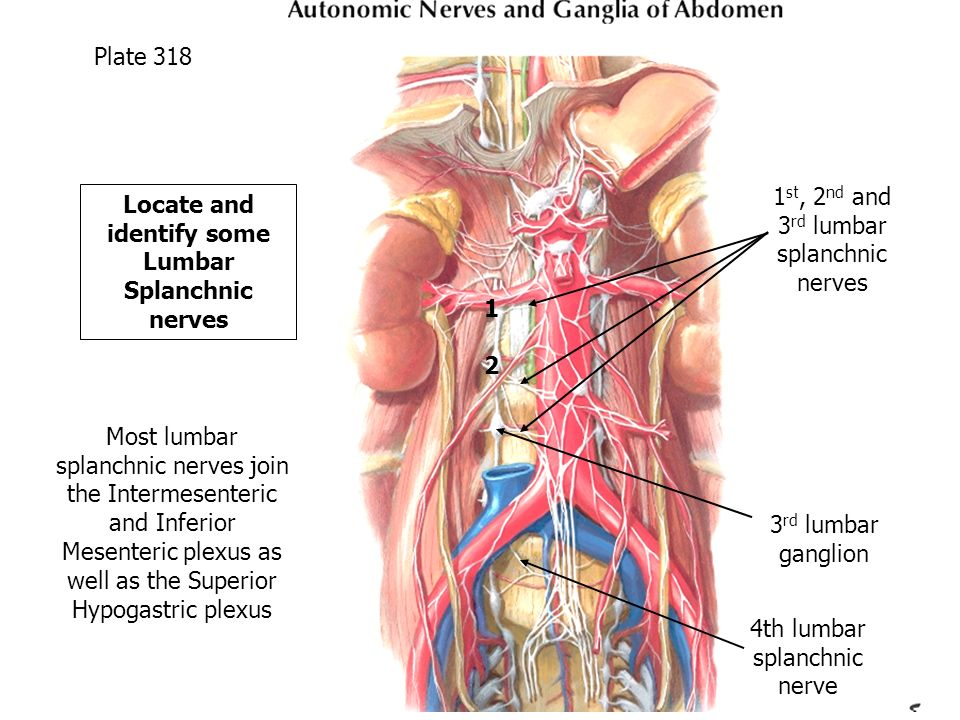 Posterior Abdominal Wall Diaphragm Lymphatics And Nerves Ppt Video
