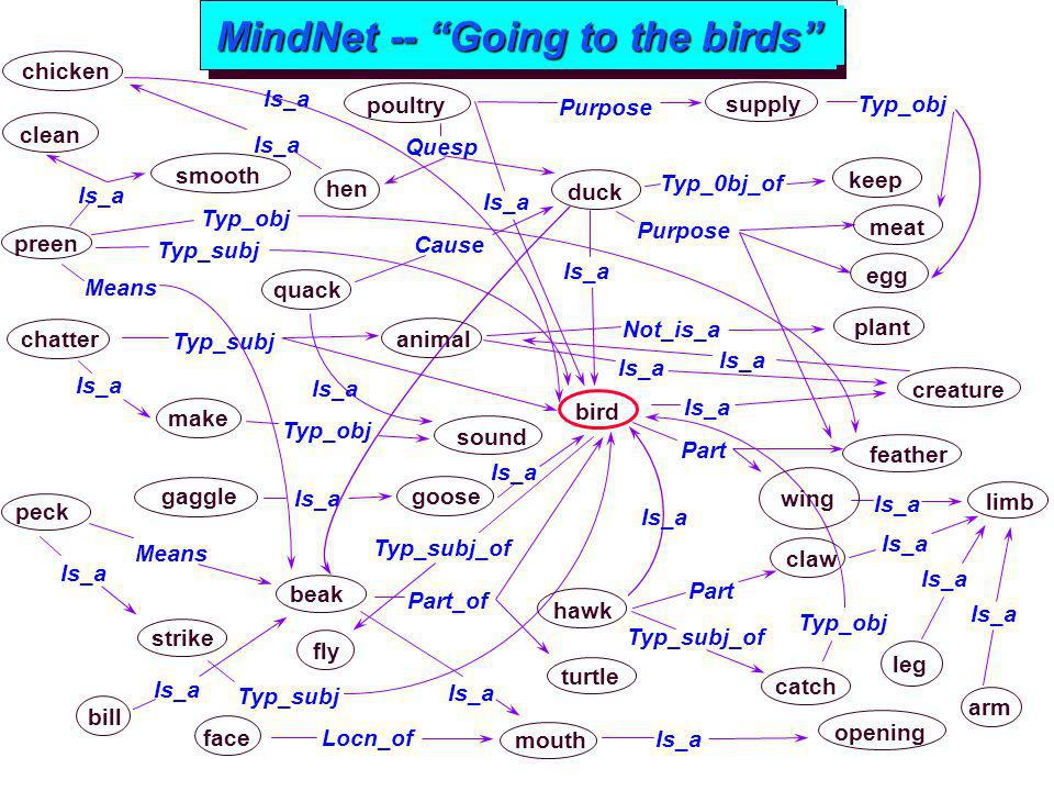 MindNet -- Going to the birds