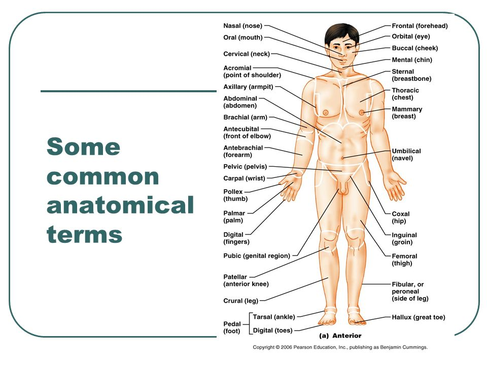 Anatomical Language And Terminology Ppt Video Online Download