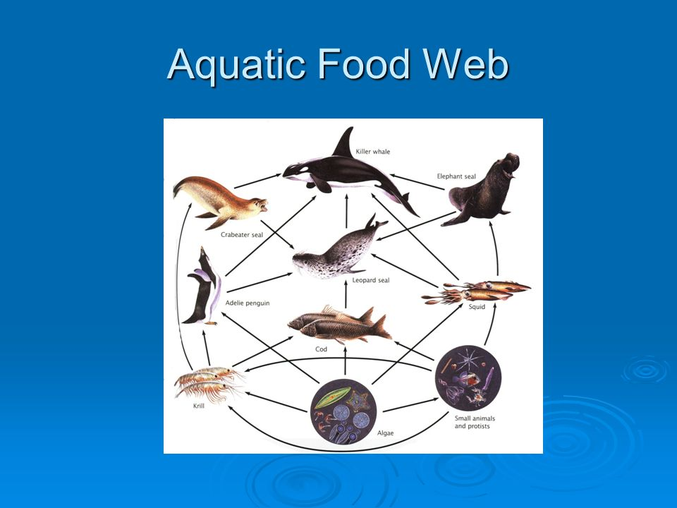 Aquatic Food Web