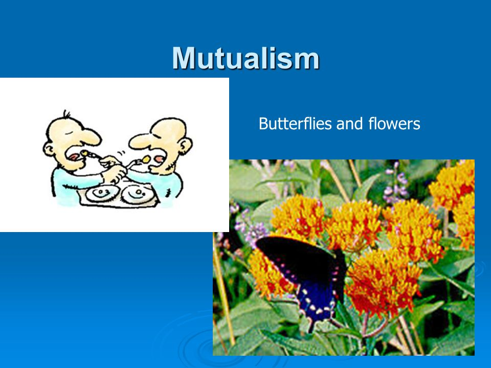 Mutualism Butterflies and flowers