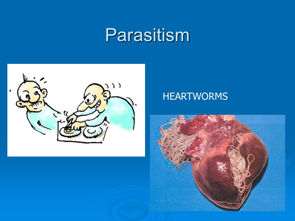 Parasitism HEARTWORMS