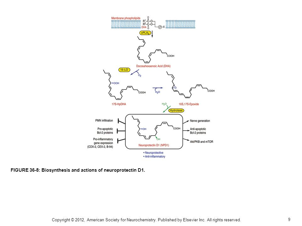 FIGURE 36-8: Biosynthesis and actions of neuroprotectin D1.