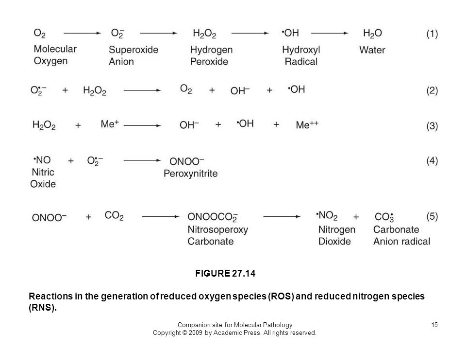 FIGURE 27.14 Reactions in the generation of reduced oxygen species (ROS) and reduced nitrogen species (RNS).