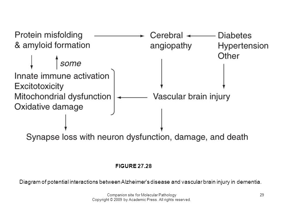 FIGURE 27.28 Diagram of potential interactions between Alzheimer s disease and vascular brain injury in dementia.