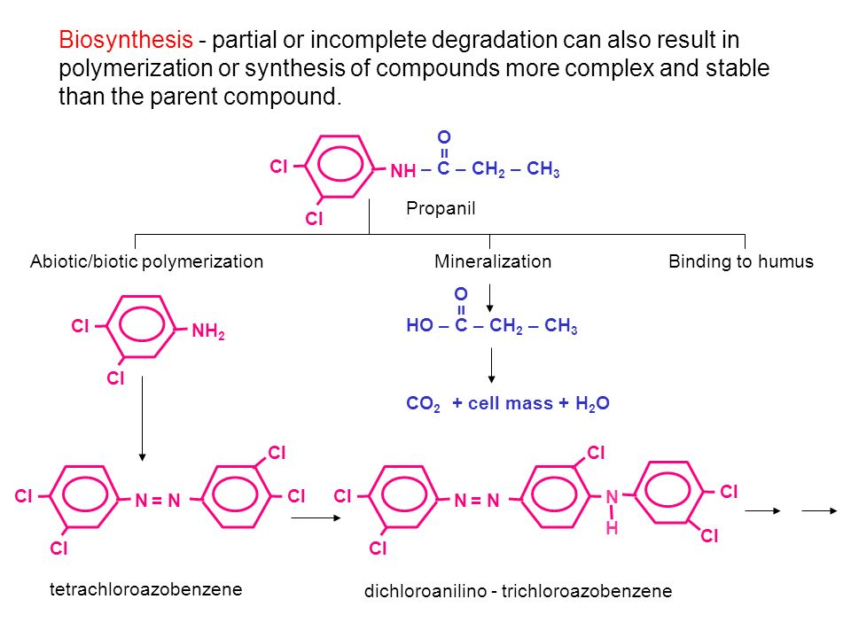 Biosynthesis - partial or incomplete degradation can also result in polymerization or synthesis of compounds more complex and stable than the parent compound.