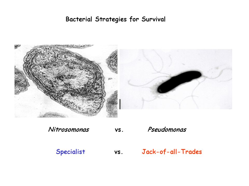 Bacterial Strategies for Survival
