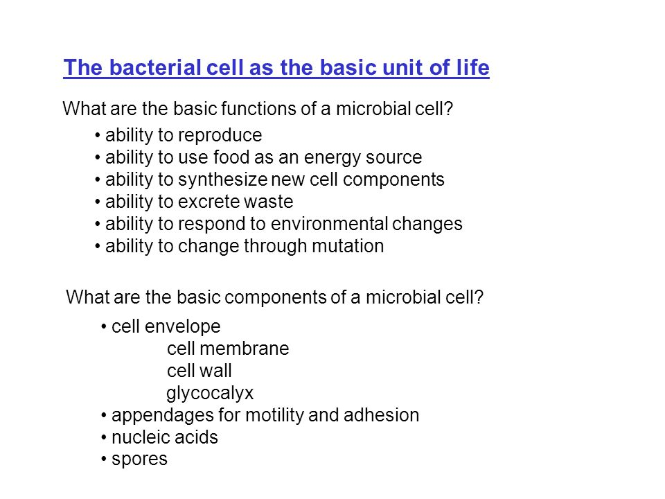 The bacterial cell as the basic unit of life
