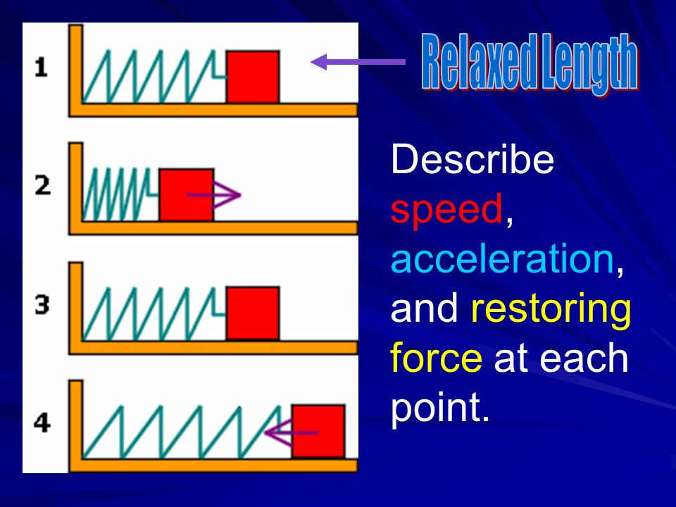 Describe speed, acceleration, and restoring force at each point.