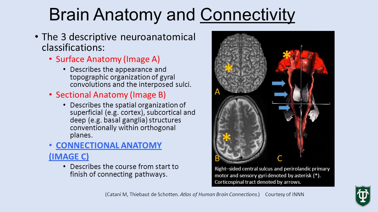 ASNR 53rd Annual Meeting and The Foundation - ppt video online download