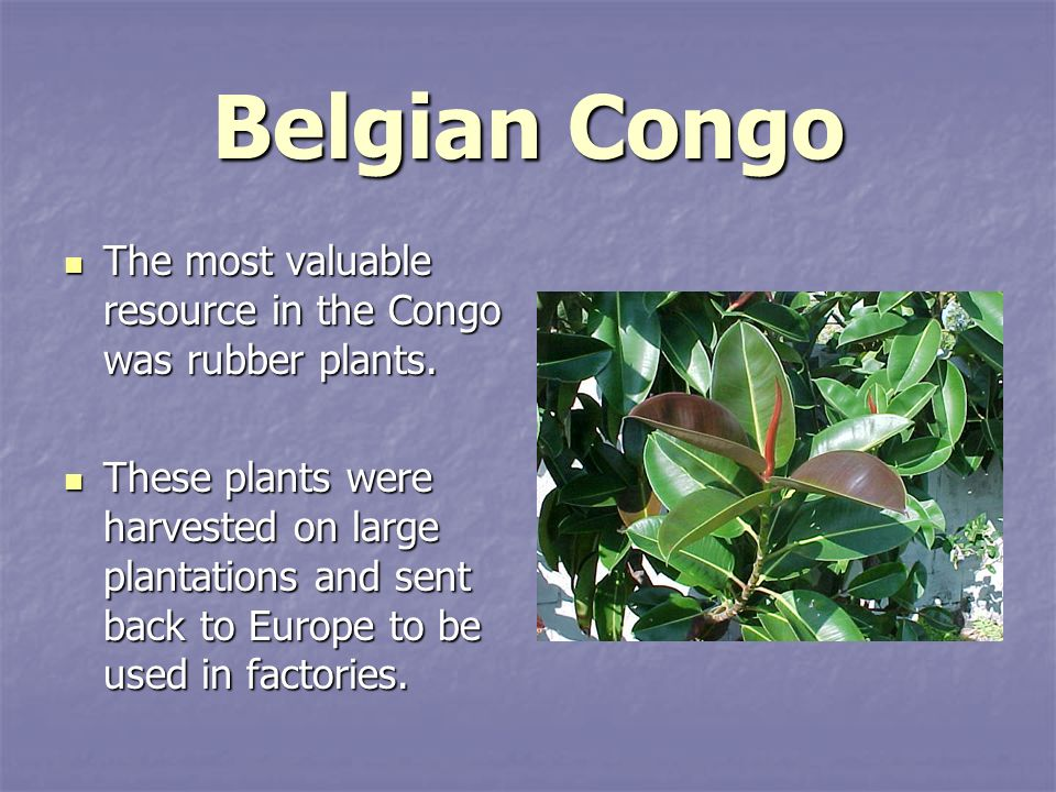 Belgian Congo The most valuable resource in the Congo was rubber plants.