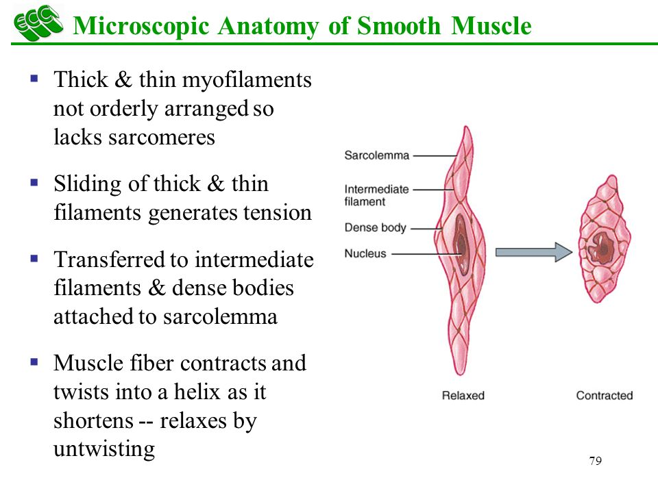 Overview Skeletal Muscle Cardiac Muscle Smooth Muscle - ppt download