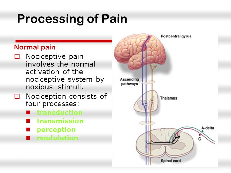 Pathophysiology of Pain - ppt download
