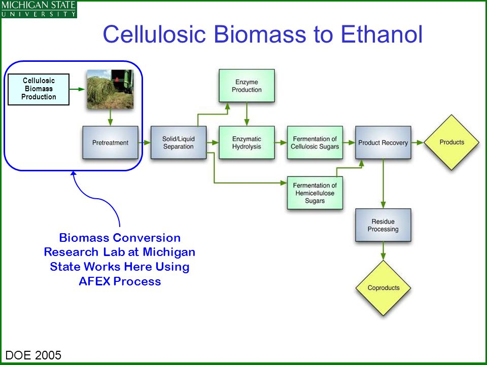 Cellulosic Biomass Production
