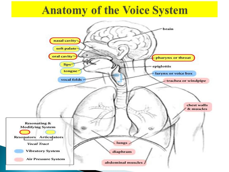 Phonetics Phonetics It Is The Science Of Speech Sounds It Is The