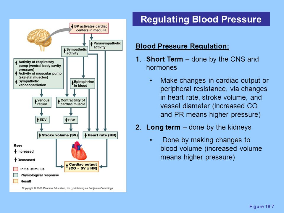 Blood Vessels Chapter ppt video online download