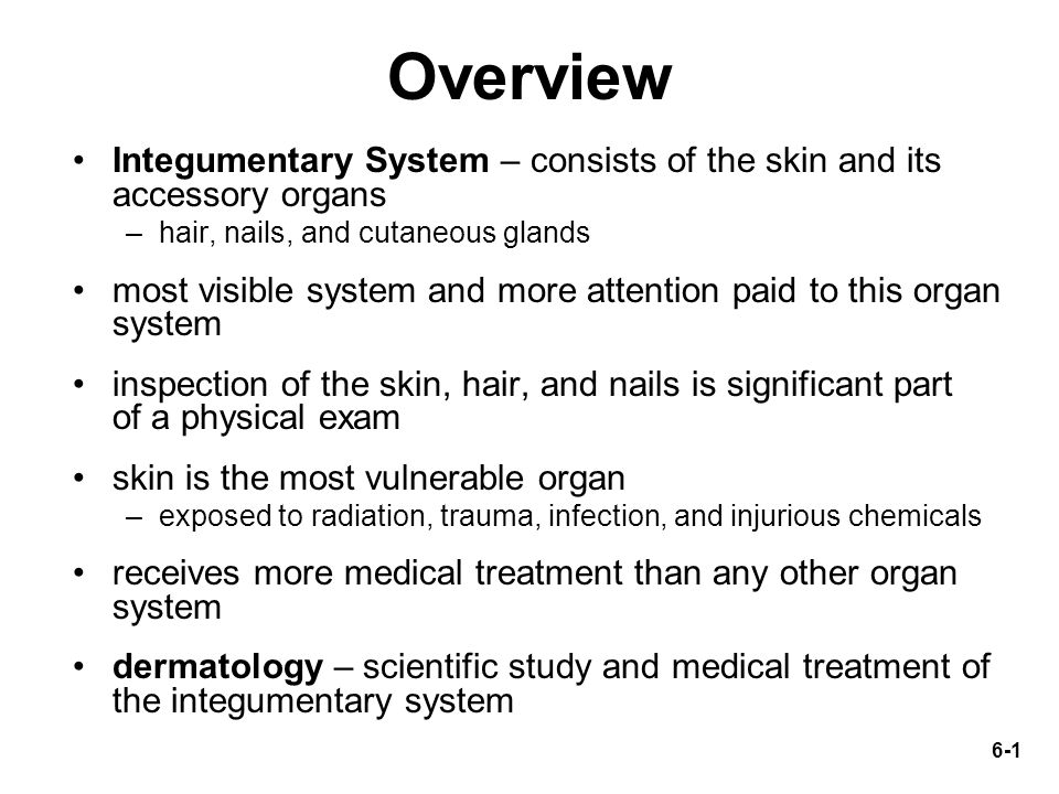 review questions integumentary system The integumentary system chapter 6 •skin functions •skin layers •skin color •hair •nails •cutaneous glands •burns.