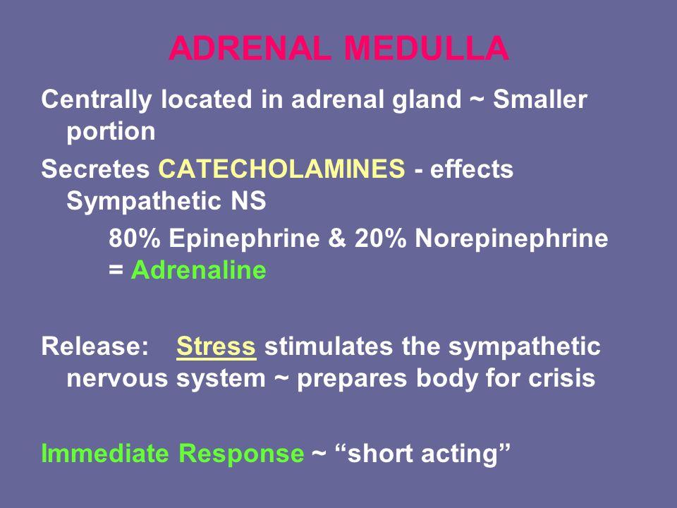 Endocrine System Ppt Download