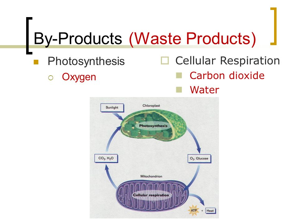 By-Products (Waste Products)