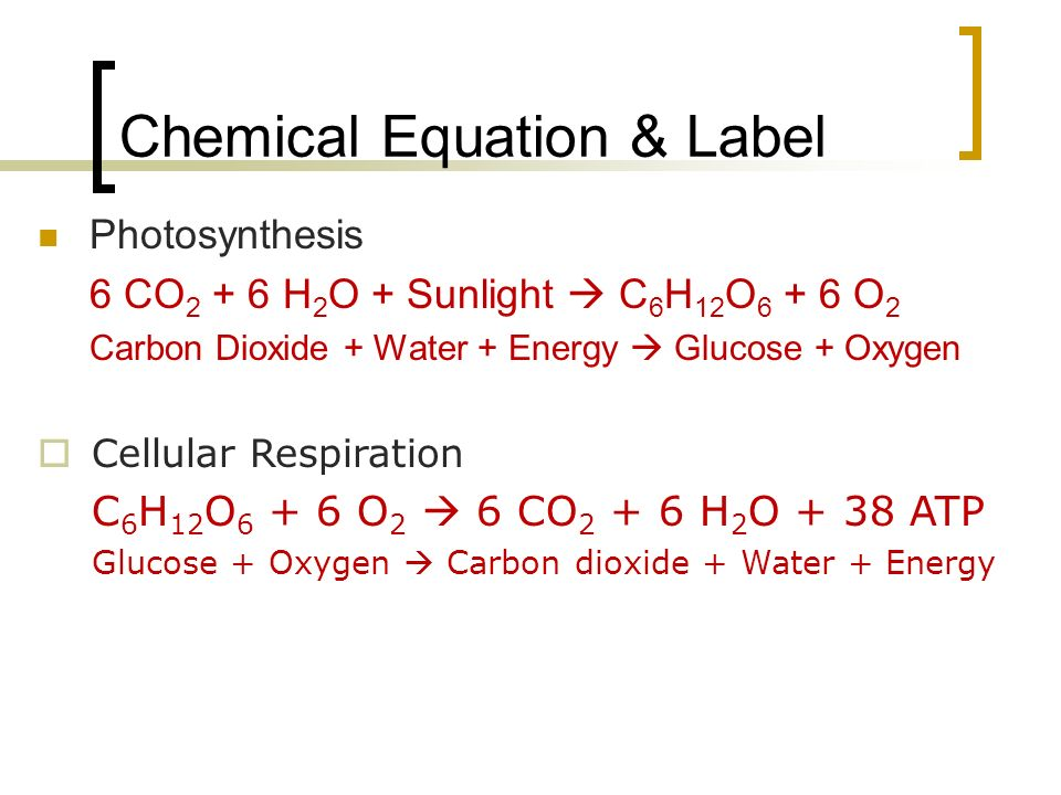 Chemical Equation & Label